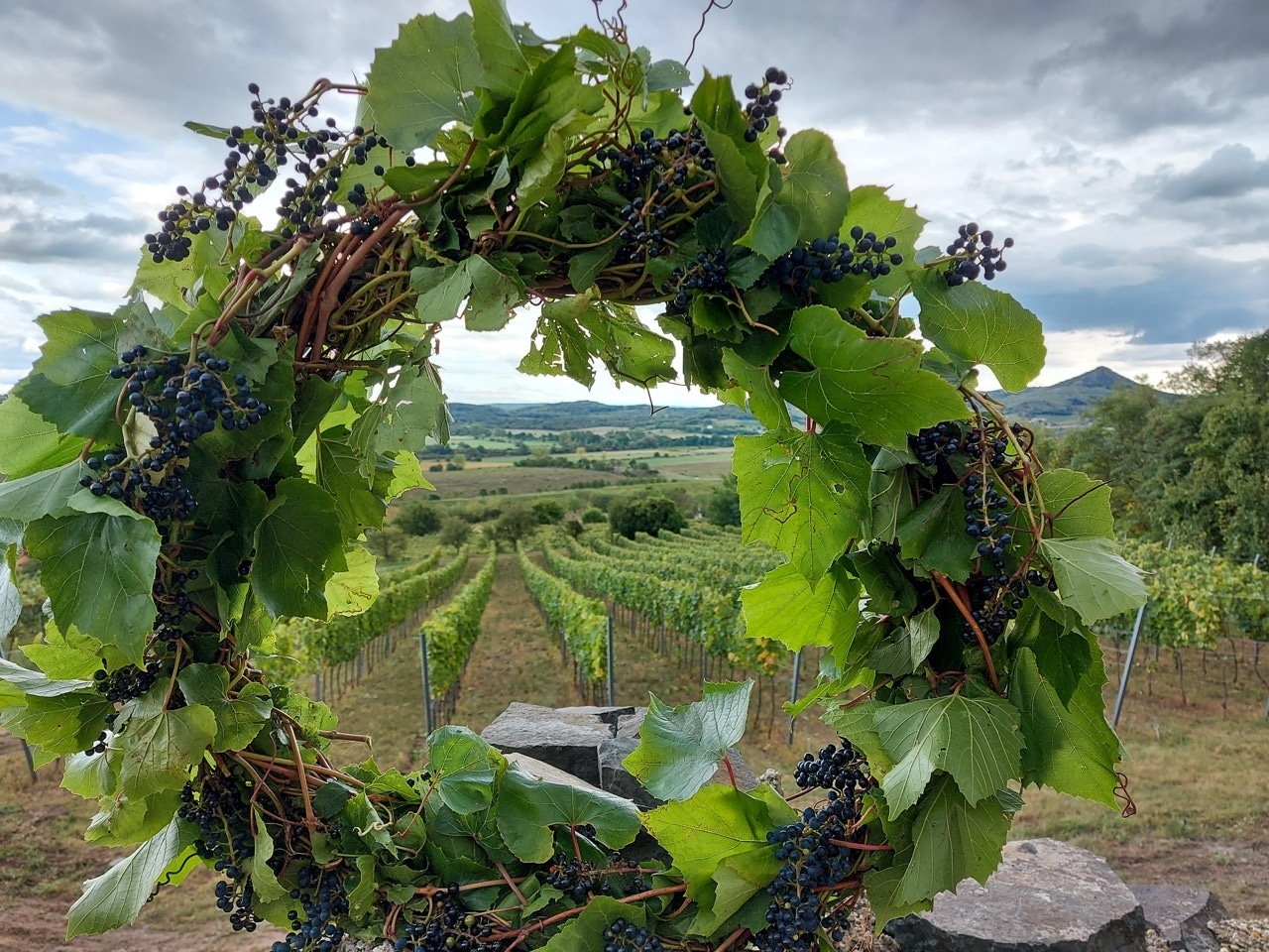 Estate visit Harvest Wreath before Furmint